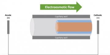 this shows how electro osmosis works in masonry